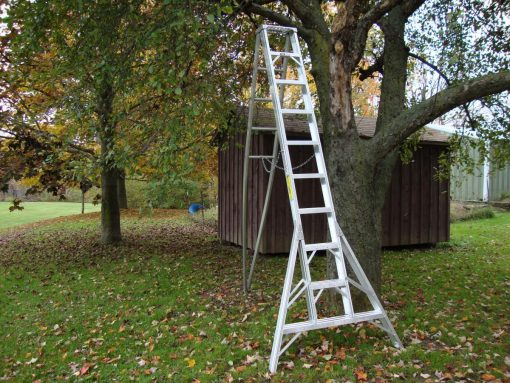 Orchard Stepladders